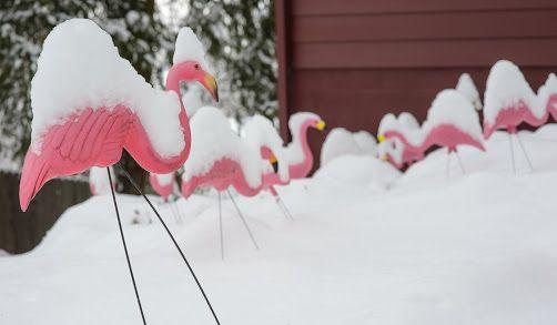 50's pink flamingo - Google 検索