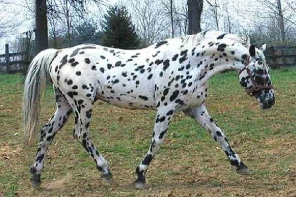 Horse Breeds The Most Popular Equine Types A To Z Horse
