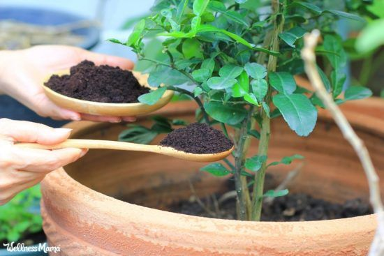 What to Do With Used Coffee Grounds | Wellness Mama