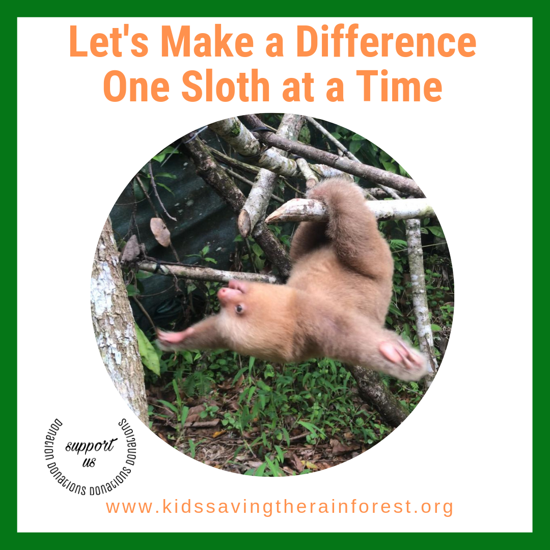 The animals from the rainforest need your help! We have
