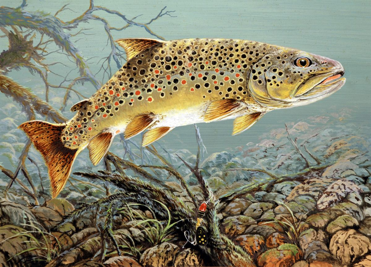 Pin by lorene jeff young layne on trout pinterest big for Trout fish pictures