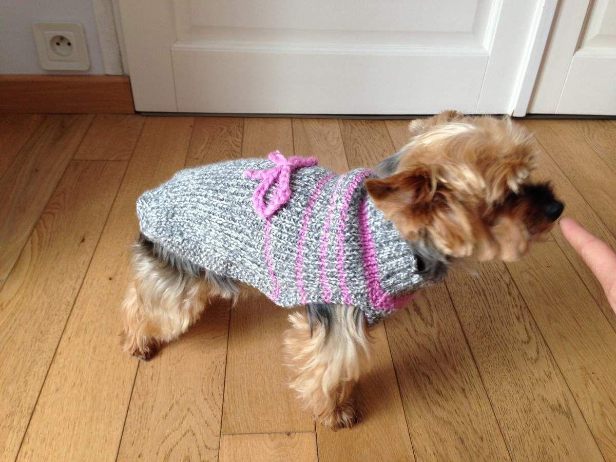 manteau pour chien tricot gratuit