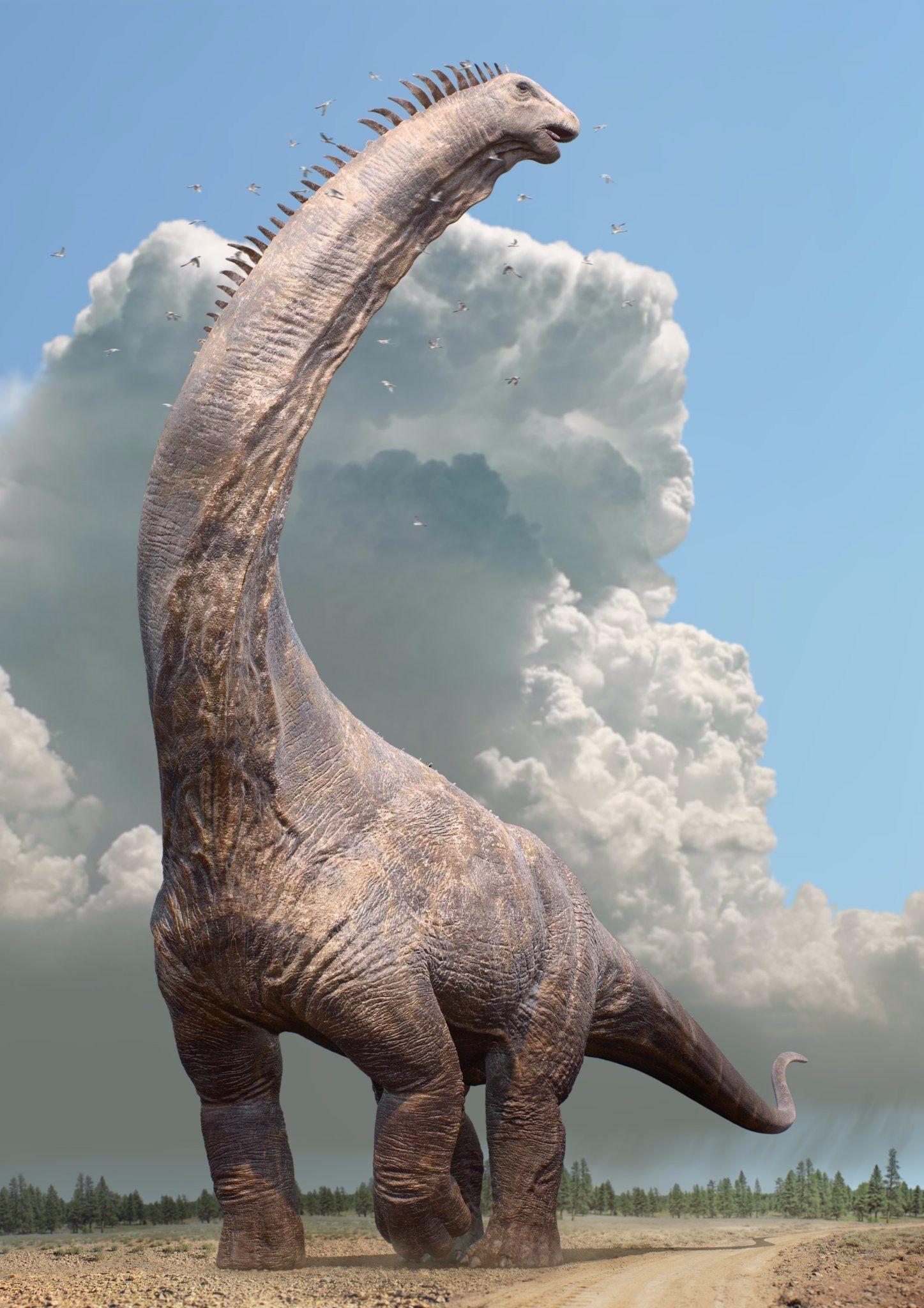 Connu Alamosaurus https://en.wikipedia.org/wiki/Alamosaurus  ET43