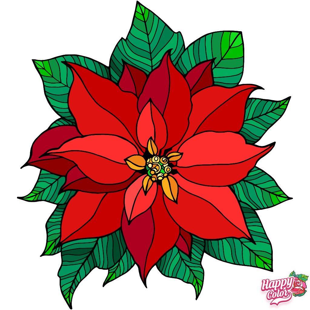 Weihnachtsstern Weihnachtsstern Bilder Sterne