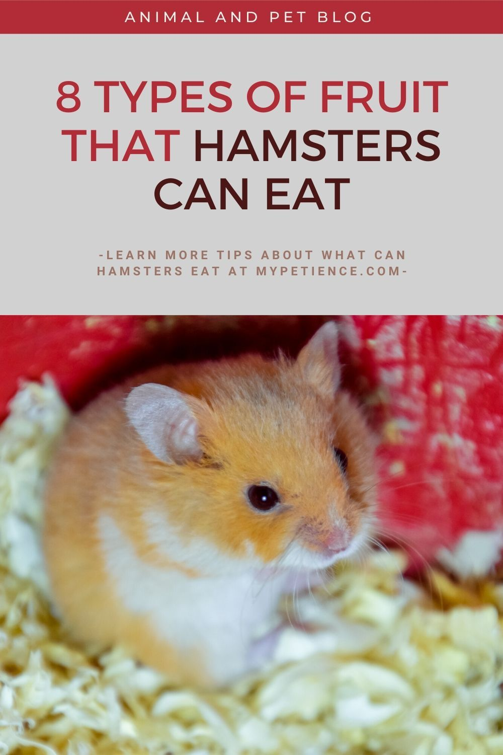 Best Hamster Food Guides What Can Hamsters Eat In 2020 Hamster Food Hamster Eating Hamster