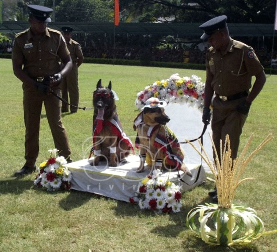 Sri Lanka Police Apologise For Dog Wedding Dog Wedding Police