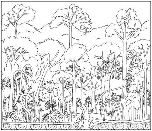 Раскраска животных и растений субтропиков