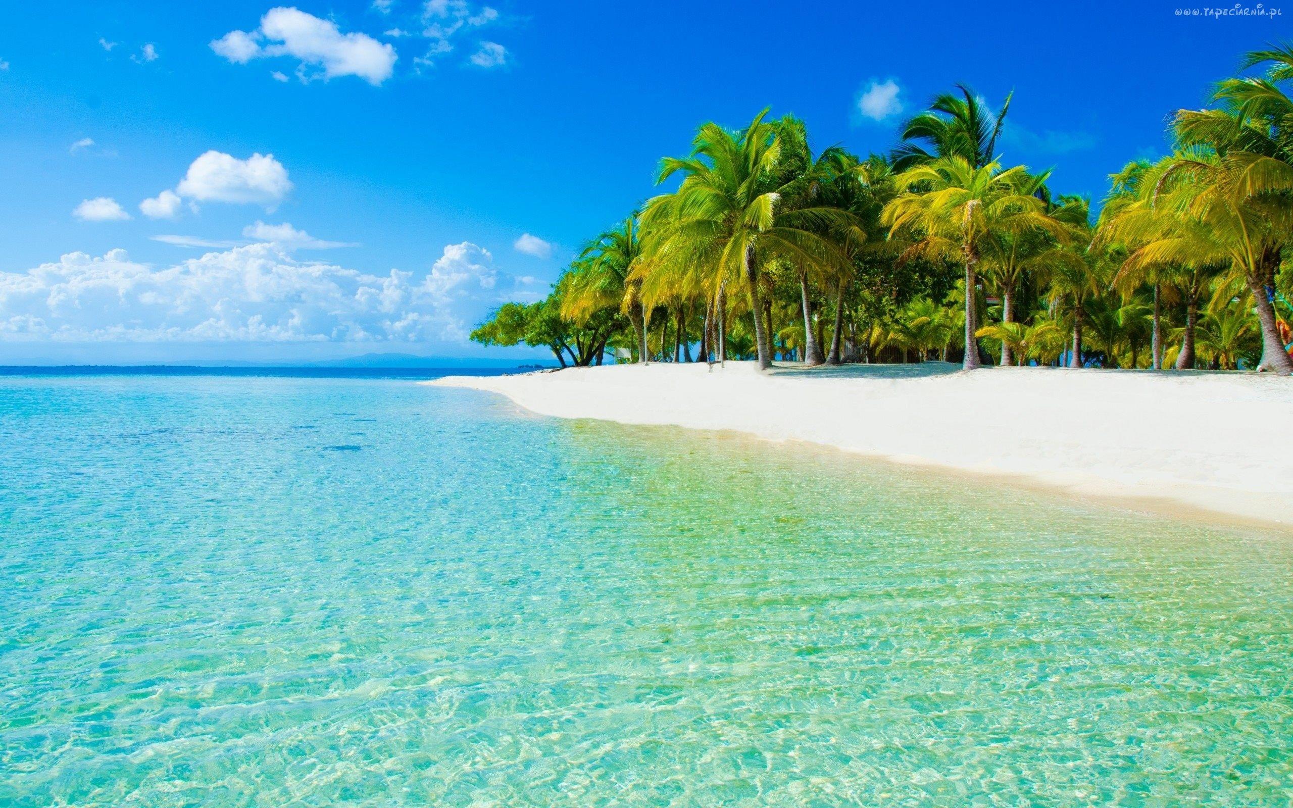 Morze, Plaża, Drzewa, Palmy