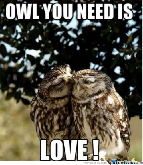 Owl Puns Pun Intended Lol Animals Cute Animals Birds
