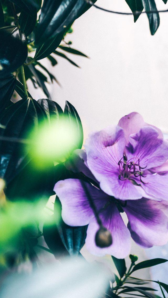 Nature wallpaper iPhone flowers | Цветы, Обои, Растения