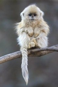 Happy Monkey Day! It really is a holiday. Every Dec 14th. I'm not just monkeying around. Check out all the monkey images on Pinterest :)