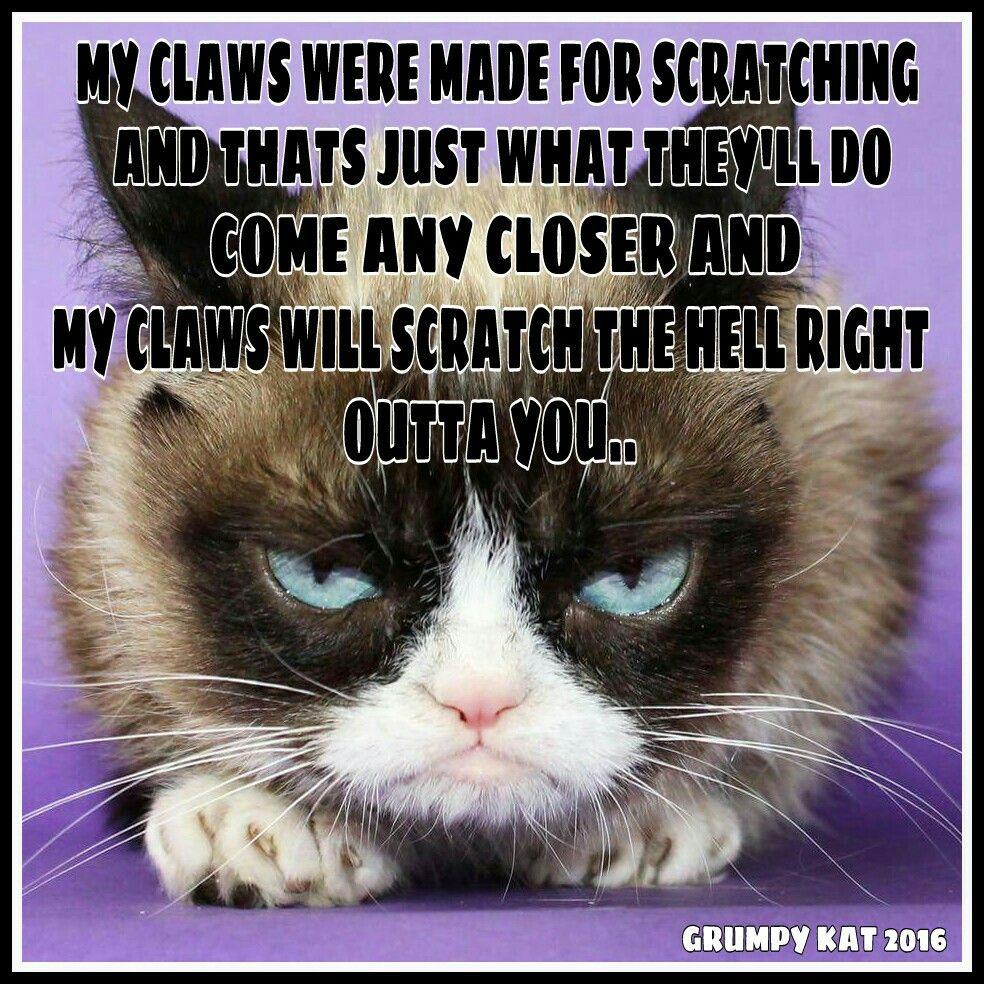 Family Christmas Card Funny Grumpy Cat Memes Grumpy Cat Humor Cat Quotes Funny