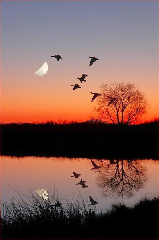 Good Night Nature Photography Beautiful Nature Nature