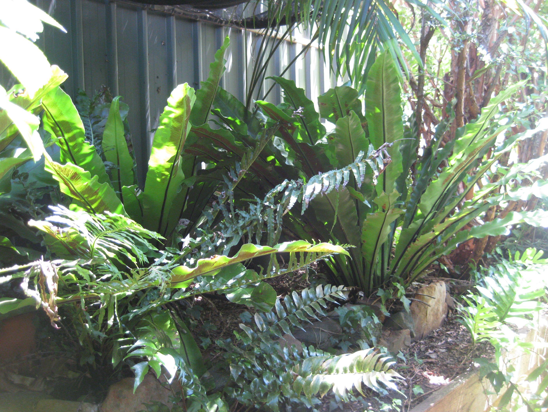Fern garden. | garden | Pinterest | Ferns garden, Fern and Gardens