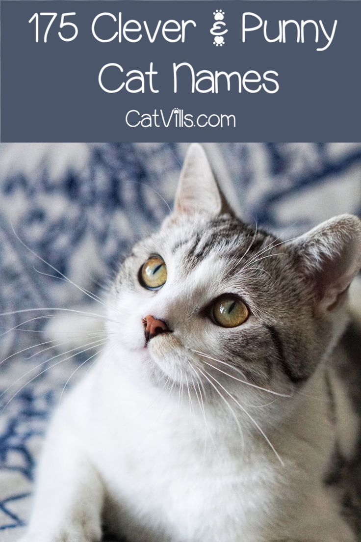 175 Clever and Punny Cat Names (With images) Cat names