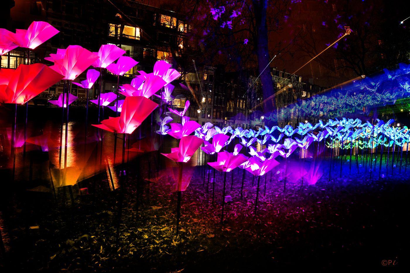 Amsterdam Light Festival 2014 Wings of Freedom