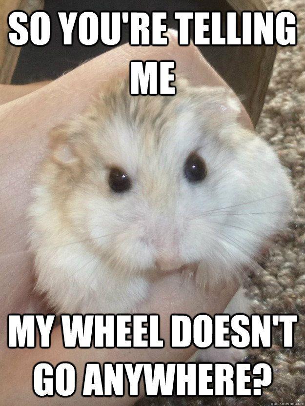 Long Hamster Hamster Meme On Me Me