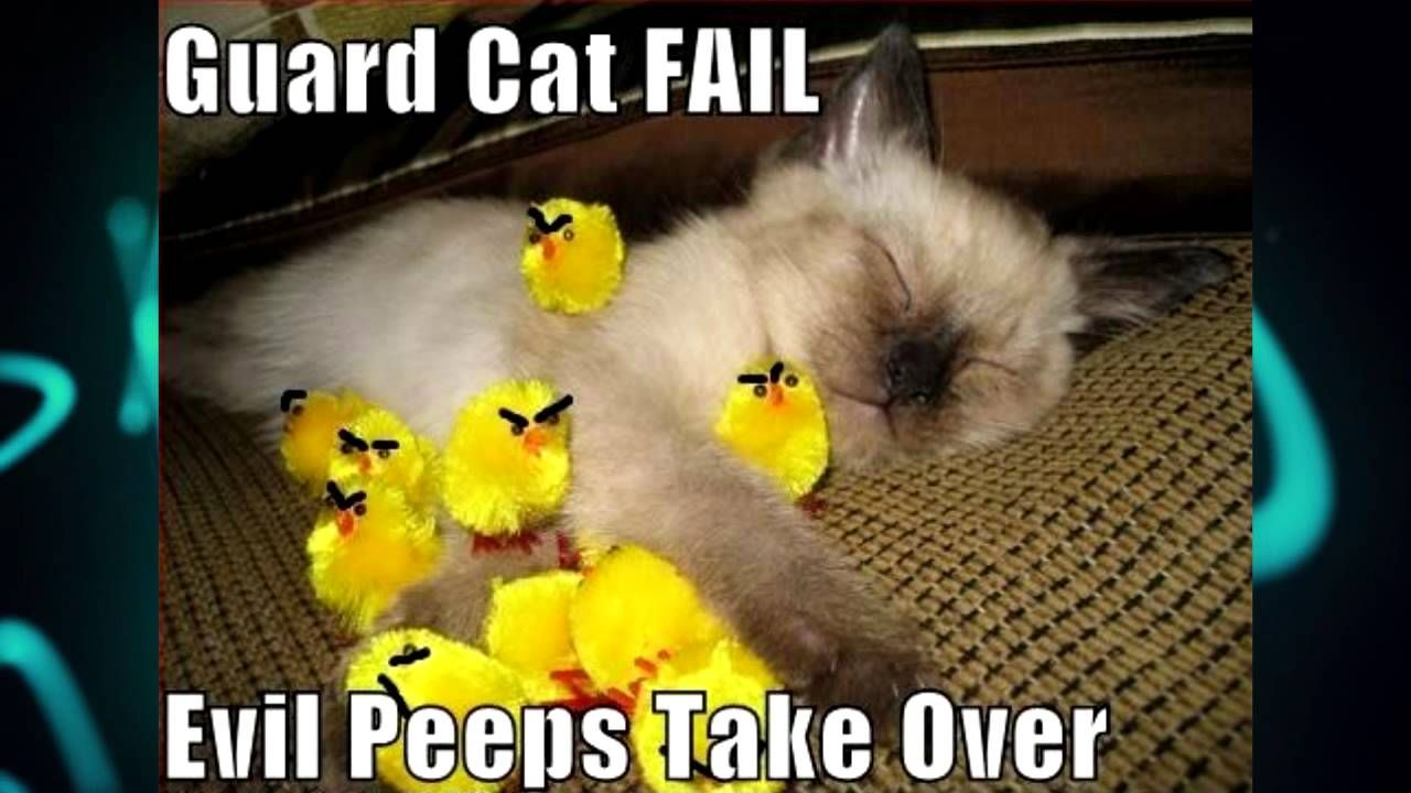 Who Knew Evil Peeps Were Even A Problem Cat Fails Funny Cute Cats Baby Cats