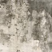 How to Tell If Black Mold Is Hiding in Your Walls   Mold ...