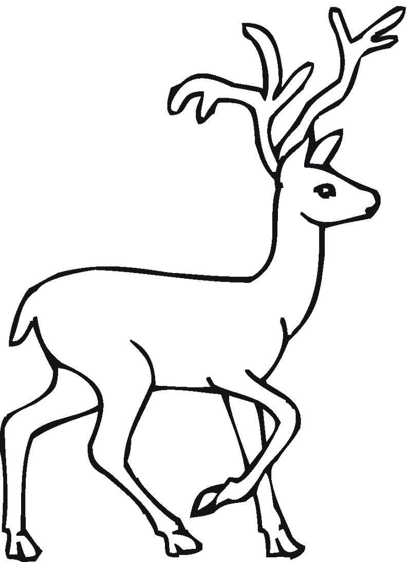 Browning Deer Coloring Pages Deer Coloring Pages For Your Lovely Kids Deer Coloring Pages Animal Coloring Pages Coloring Pages