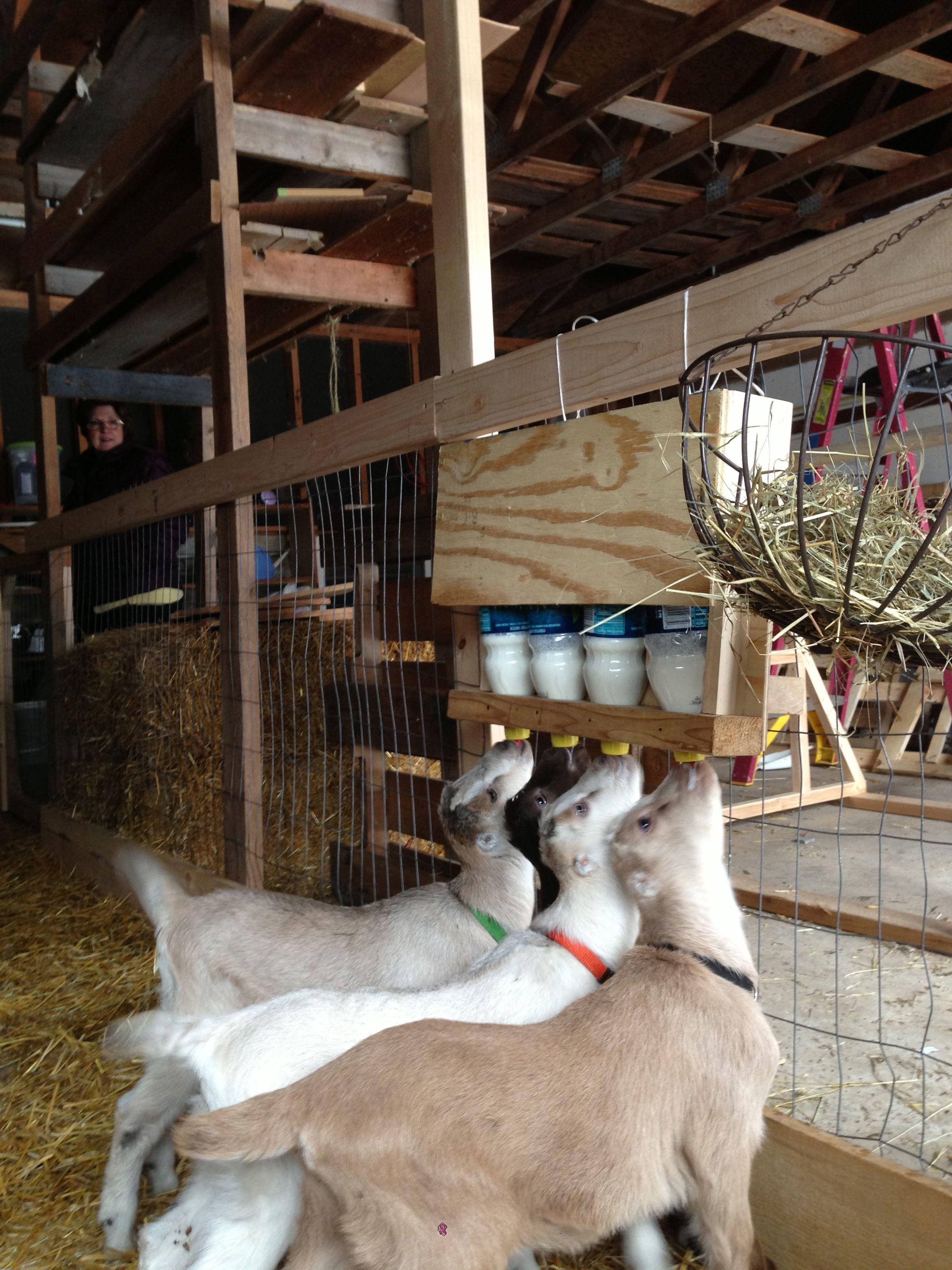 Simple Goat Bottle Holder Farm Amp Garden Pinterest