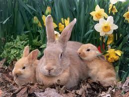 conejos - Buscar con Google
