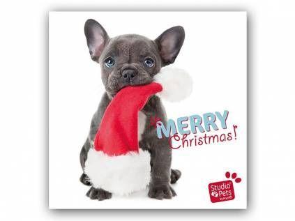 myrna weihnachtskarte franz sische bulldogge welpe. Black Bedroom Furniture Sets. Home Design Ideas