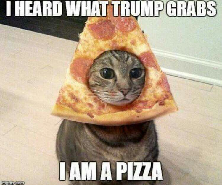 ce5c11202cb2cc75e8bac74c79e3343c clever kitty trump isms, the funnies of our potus pinterest