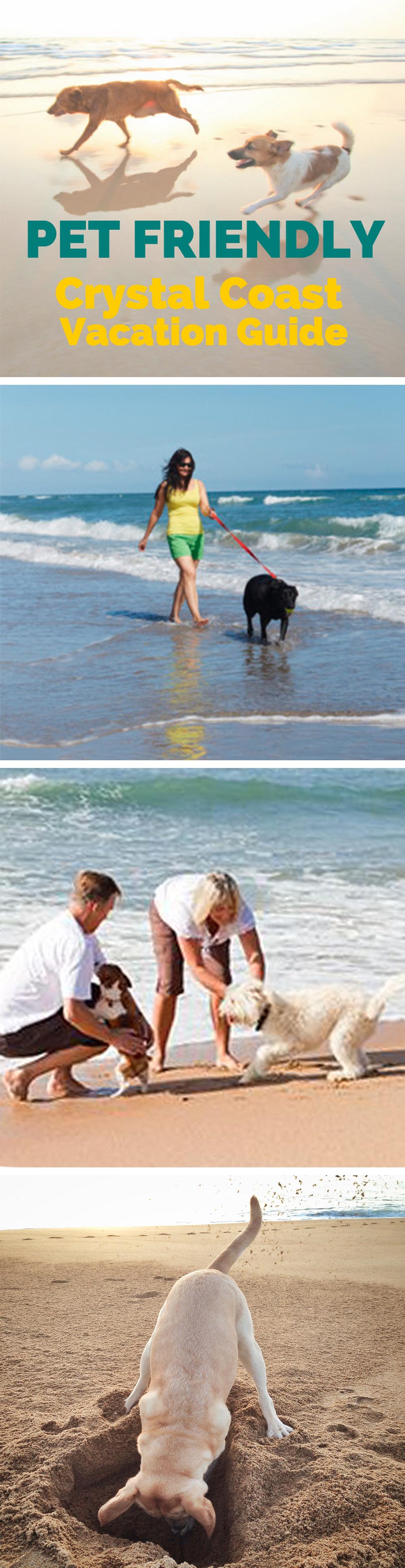 Pet Friendly Beach Rentals Pet Friendly Vacation Rentals Pets Vacation Pictures