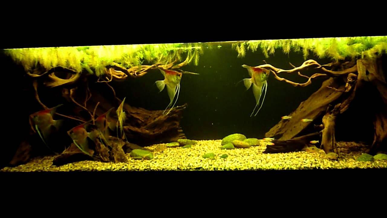 Amazon biotope aquarium 2 youtube mr aqua 12 gal for Amazon aquarium fish