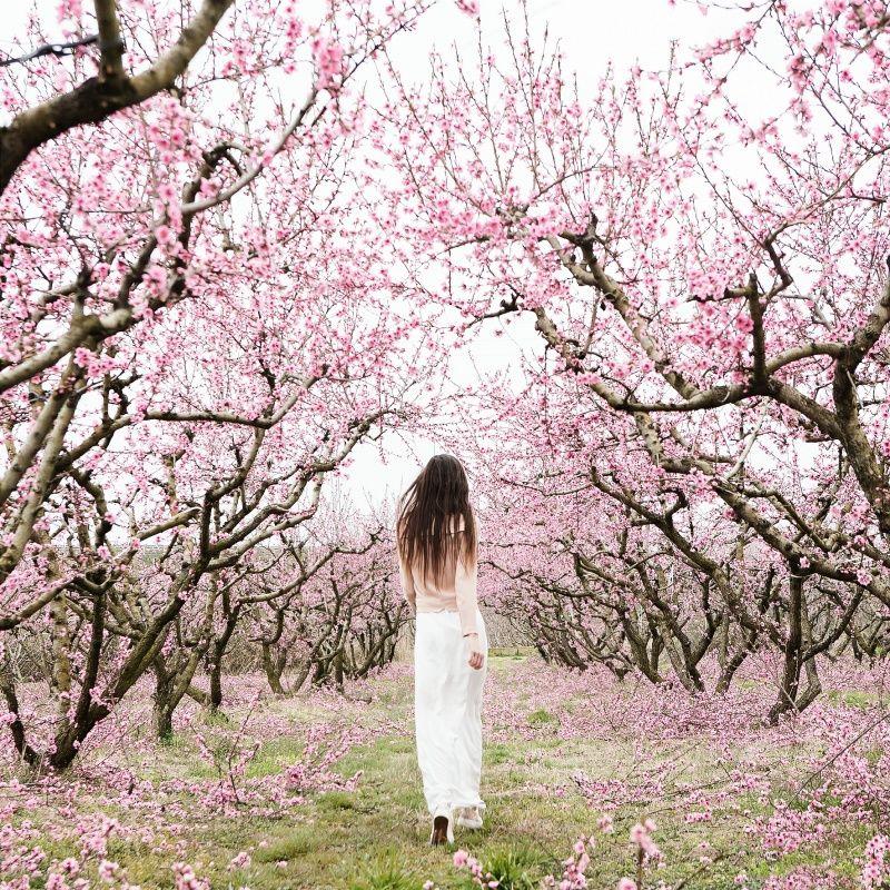 Blossom Maralazaridou Vsco Grid Spring Photography Pink Blossom Tree Blossom Trees