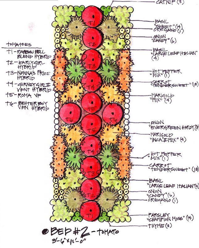 The Kk Report My Biointensive Garden Plan Tomaten 400 x 300