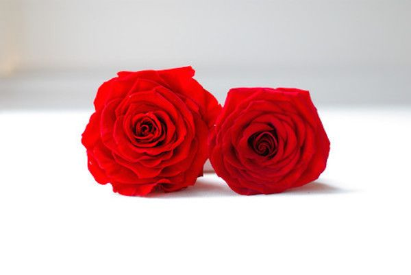 Which one of these two red beauties do you think is preserved? Give up? It's the fuller one on the left. #Wedding #RedRoses #Flowers