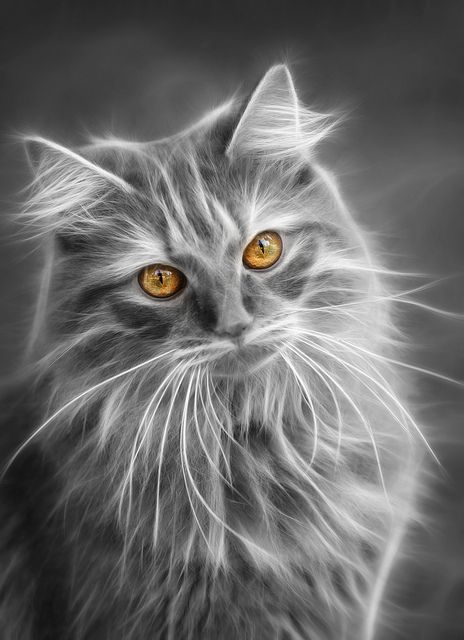 Mona | Flickr - Photo Sharing!