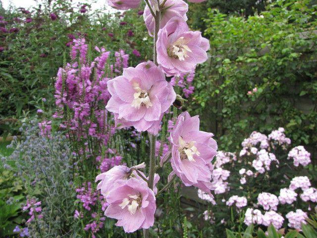 weelderige bloemen tuin