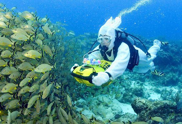 Scuba Diving Off Of Boynton Beach Fl Photo By Bob Care Florida Keys News Bureau