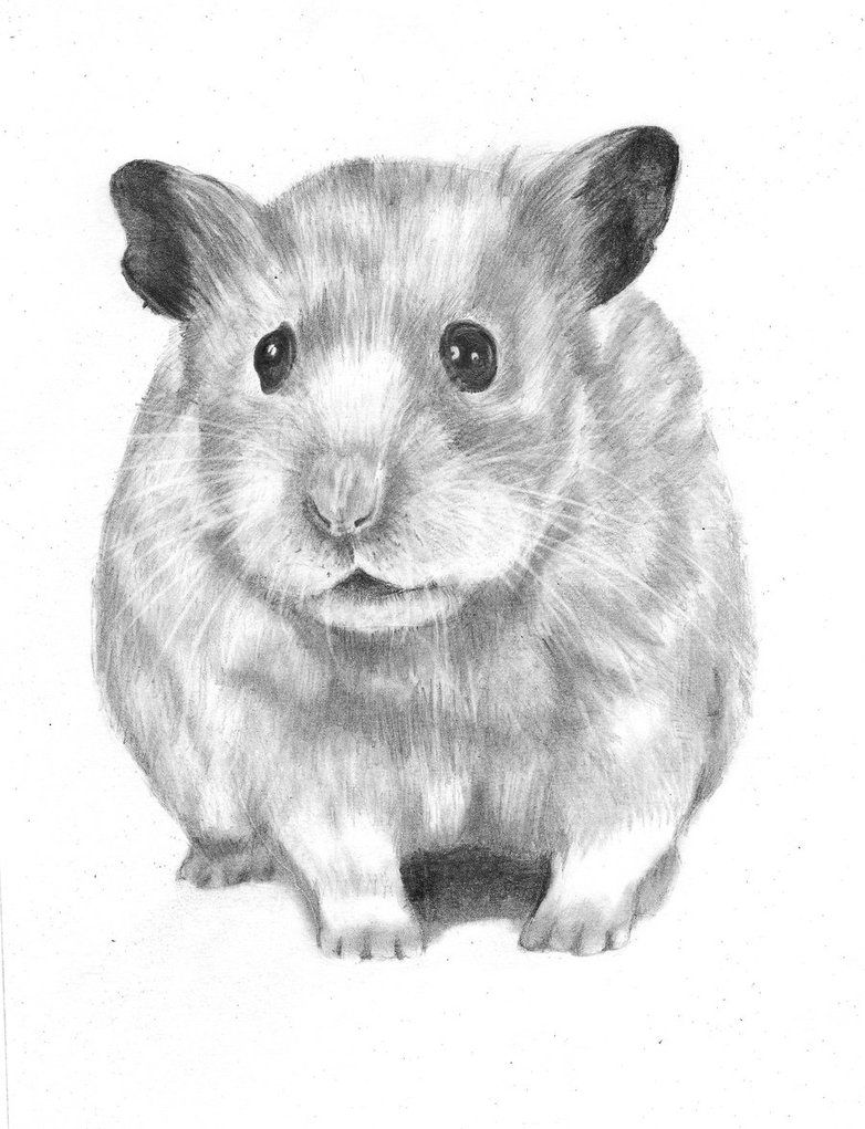 hamster drawing google search artistic pinterest draw