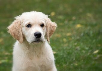 How To Prepare For A New Puppy-Checklist For A New Puppy | Just For Your Dog #newpuppy