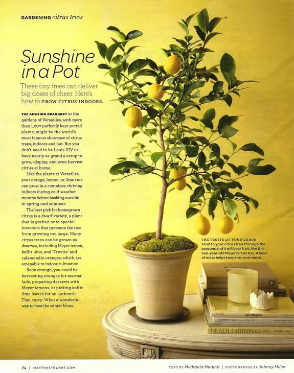 start here: indoor lemon tree and for outdoors duos/trios for crosspollination (unpinnable) http://www.flemings.com.au/documents/plant_a_duo_guide.pdf