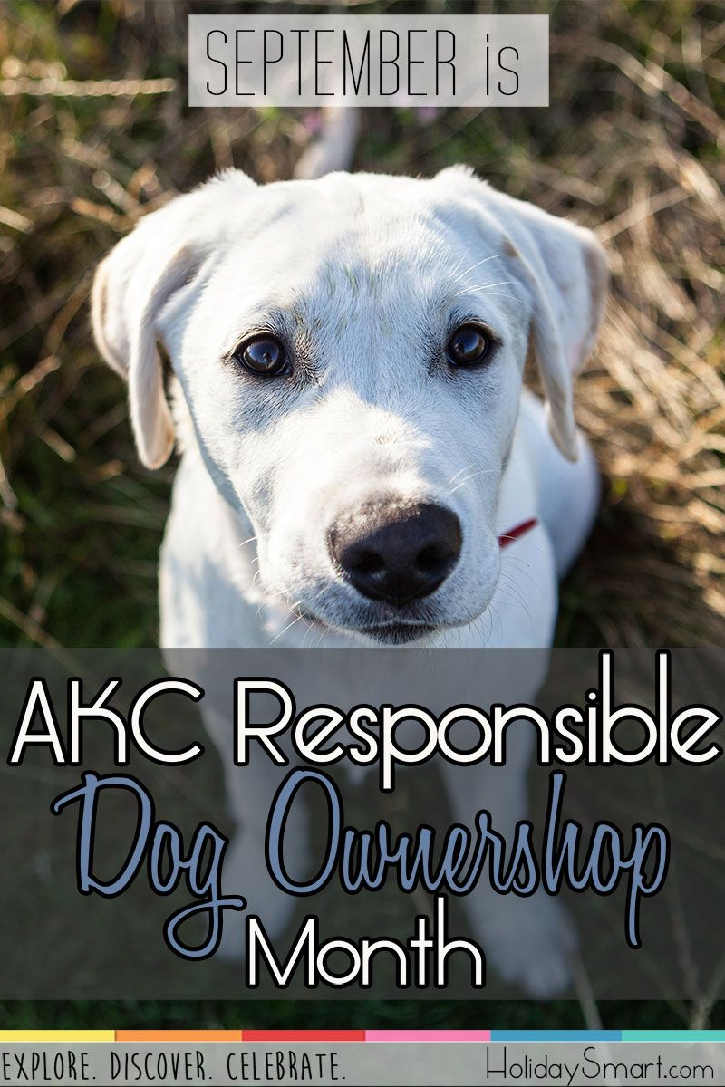 September is AKC Responsible Dog Ownership Month! Dog