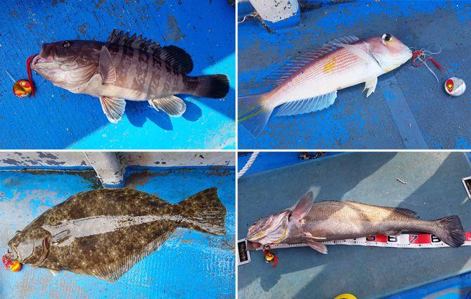 [김태진의 루어낚시 이야기] 바다의 미녀 참돔 - 시니어조선 :::: 삶의 정상에 서다! - 문화 > 라이프: JUST CATCHES LIVE FISHES ! YUMMY !