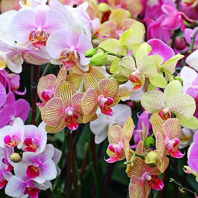 Beautiful orchids everywhere to be found at The Kahala