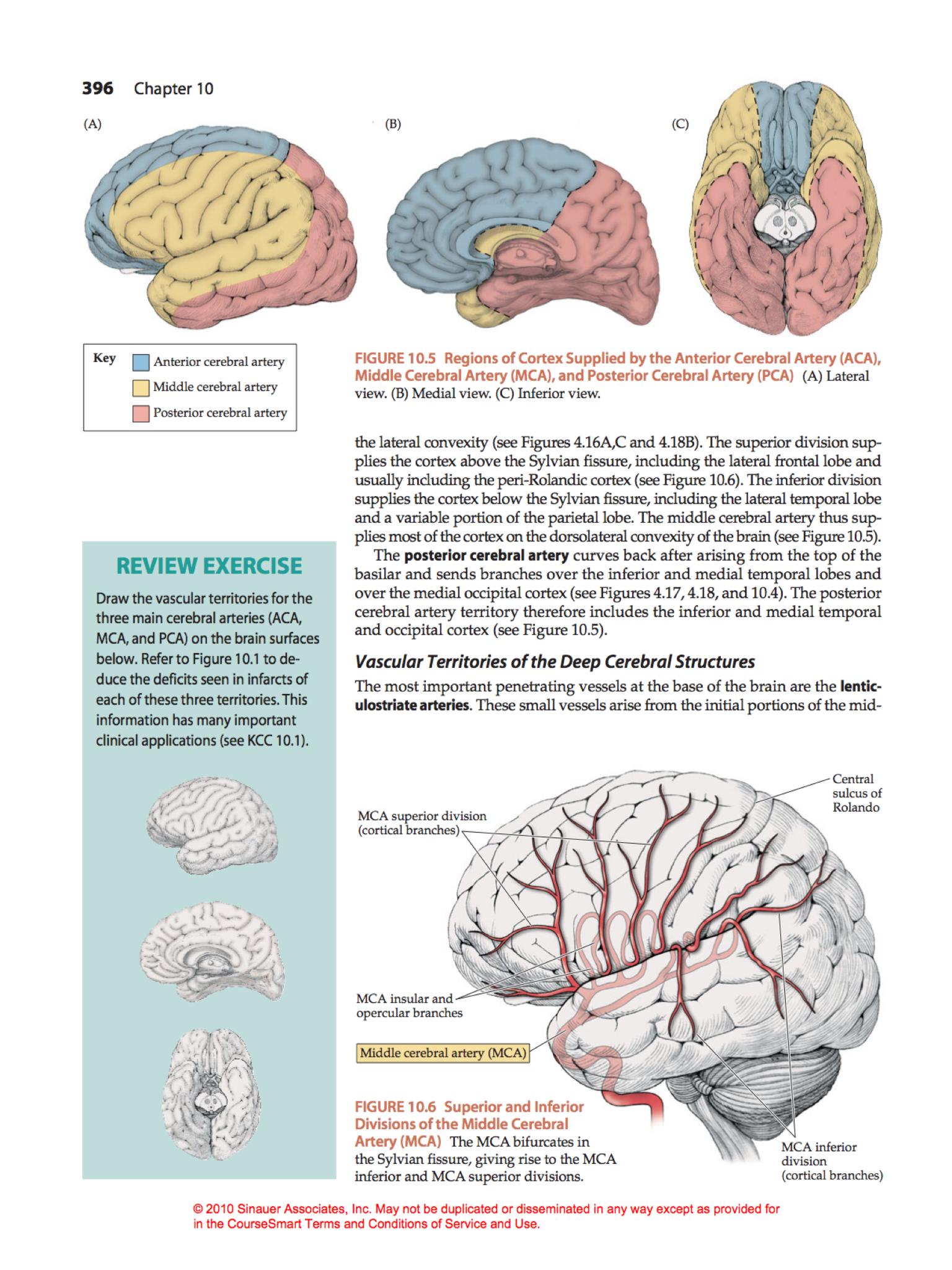 MCA branches   neurosurgery   Pinterest