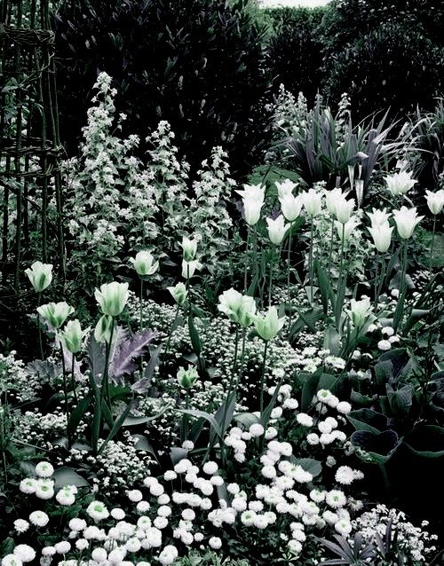 Photo of Moonlight Garden
