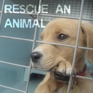 Spca Society For The Prevention Of Cruelty To Animals Dog Adoption Dog Rescuers Animal Shelter Volunteer