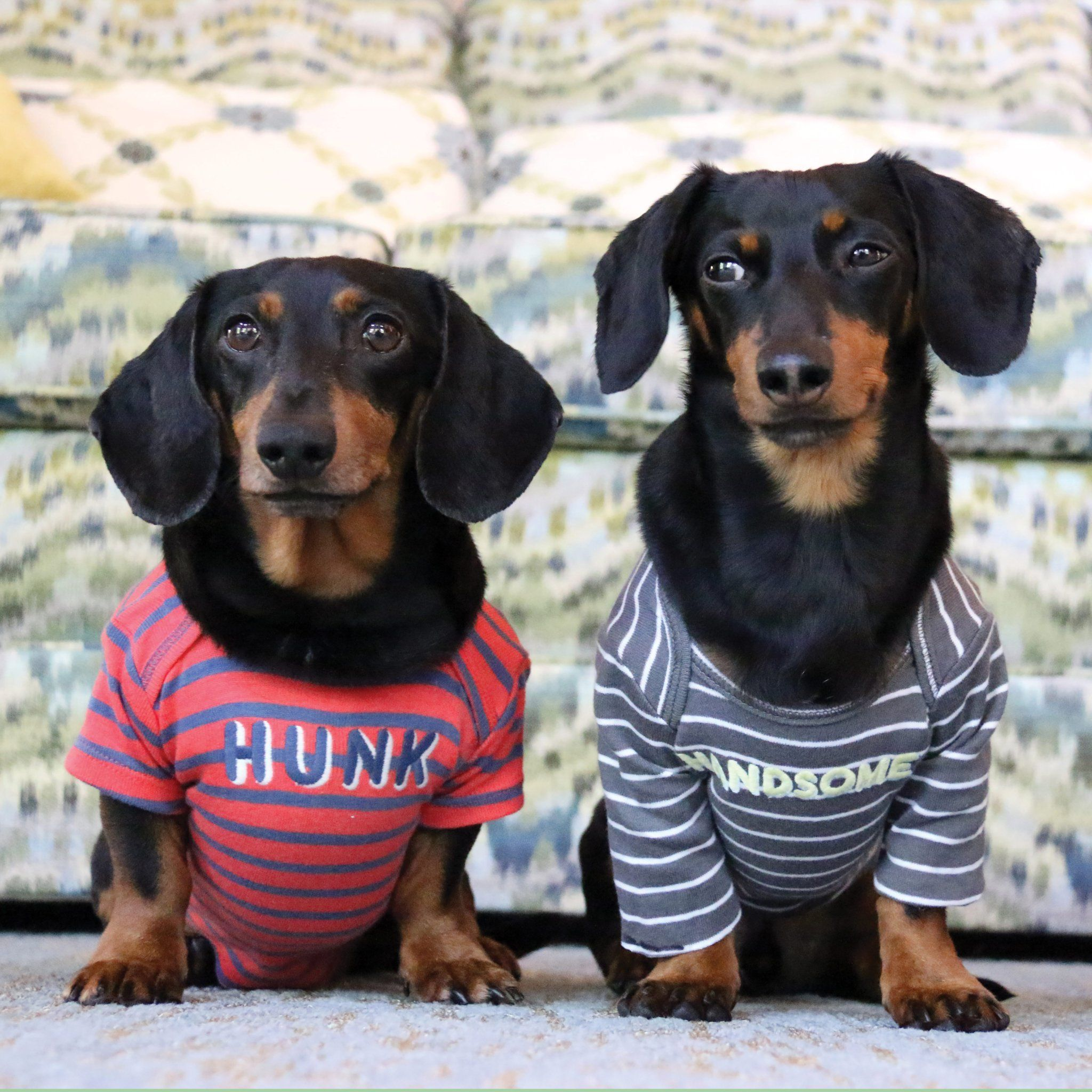 Crusoe Dachshund On Dachshund Clothes Crusoe The Celebrity