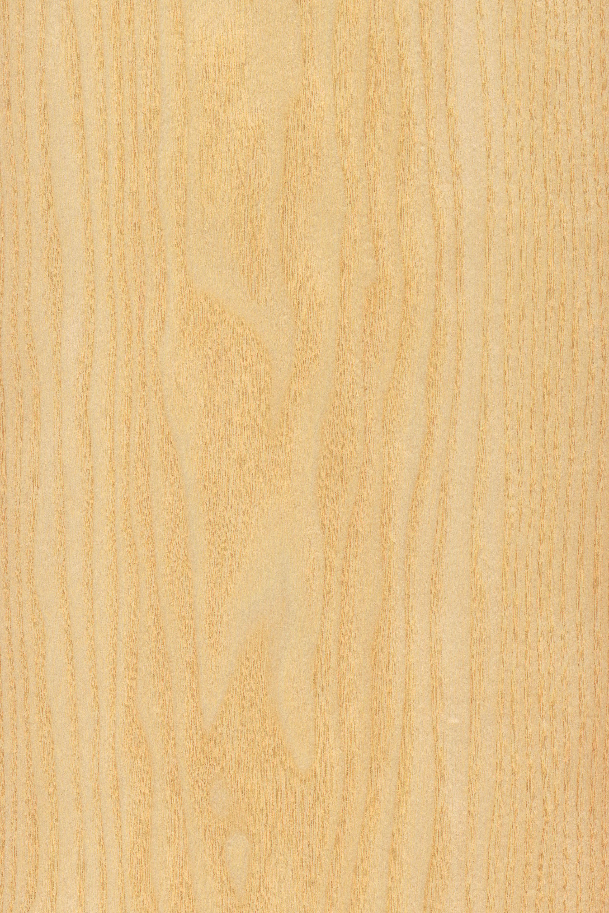 Esche   Furnier: Holzart, Esche, Blatt, hell, Laubholz #Holzarten #Furniere #Holz