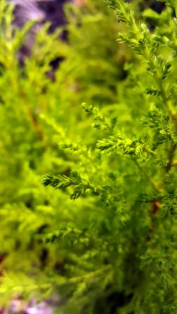 Verde: il nuovo colore di san Valentino | Bricocenter | Beautiful