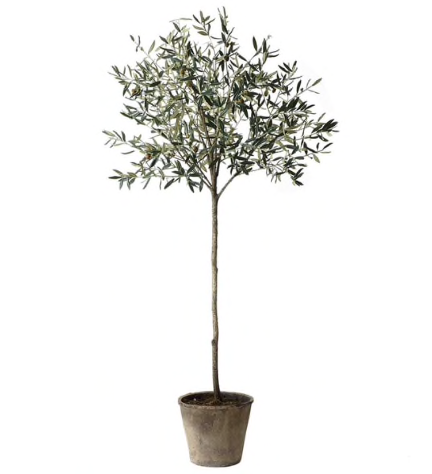 Pin By Em Design Style On Shelley Design 1 Potted Olive Tree Olive Tree Potted Trees