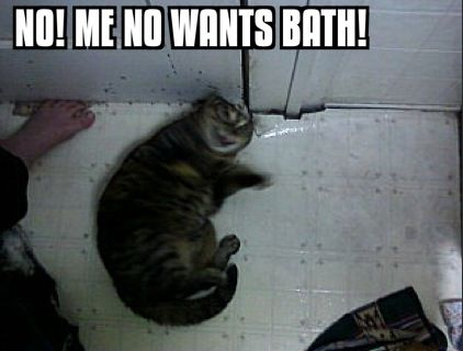 The bath is evil.... -_-